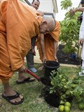 Pujya Mahant Swami plants a tree in the mandir campus