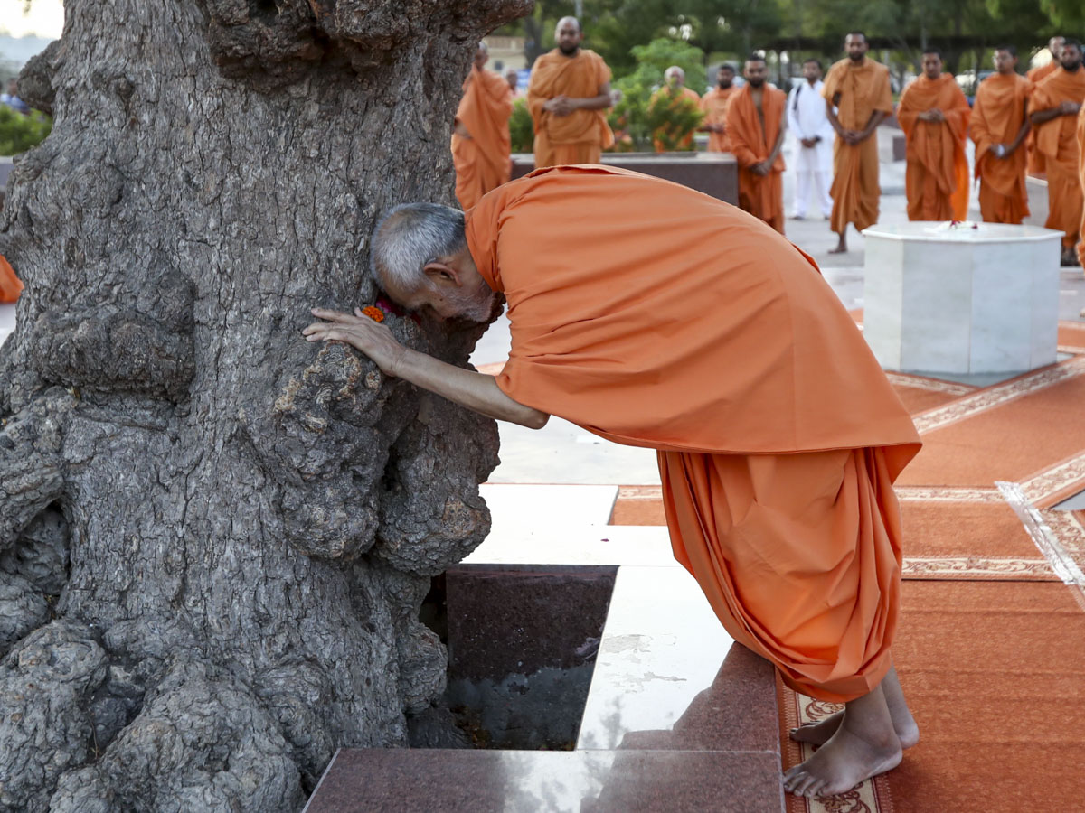 Swamishri doing darshan at the sacred khijdo tree, 6 Jun 2017