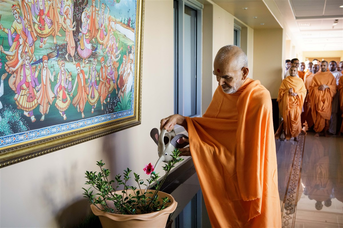 Swamishri waters a plant, 18 July 2017