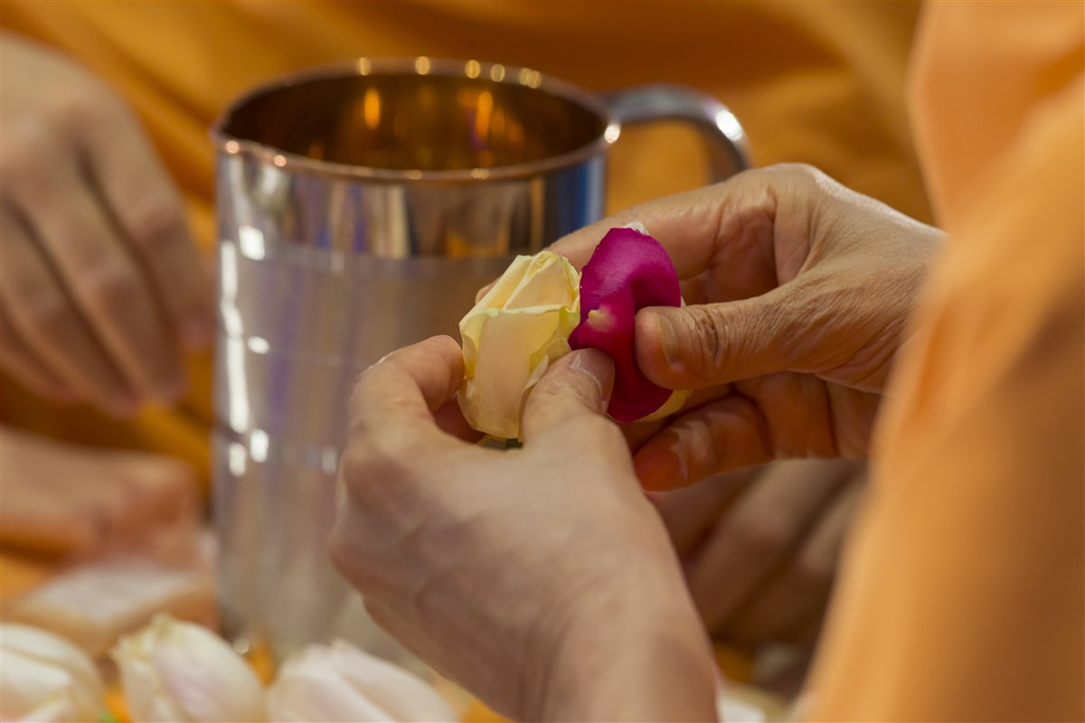 Swamishri gathers flower petals for adding to the sanctified water