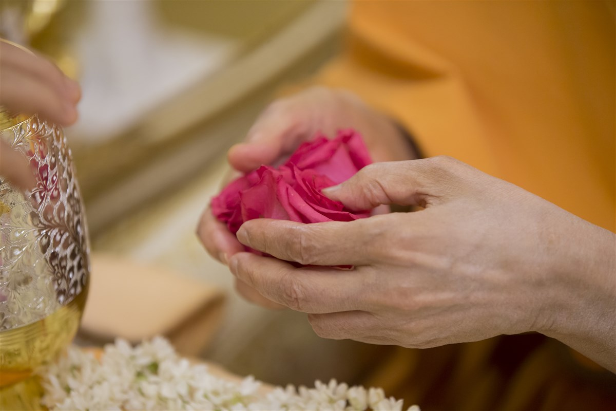 Swamishri places roses in the sanctified water