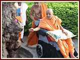 Swamishri circumambulates the sacred tree (khijdo)