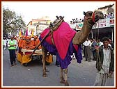 A decorated camel cart