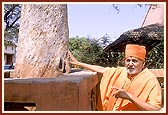 Touching the sacred tamarind tree (ambli) where Lord Swaminarayan had rocked on a swing, Laxmi Vadi