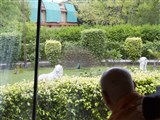 Swamishri observes a peacock dancing in the lawns in Sarangpur