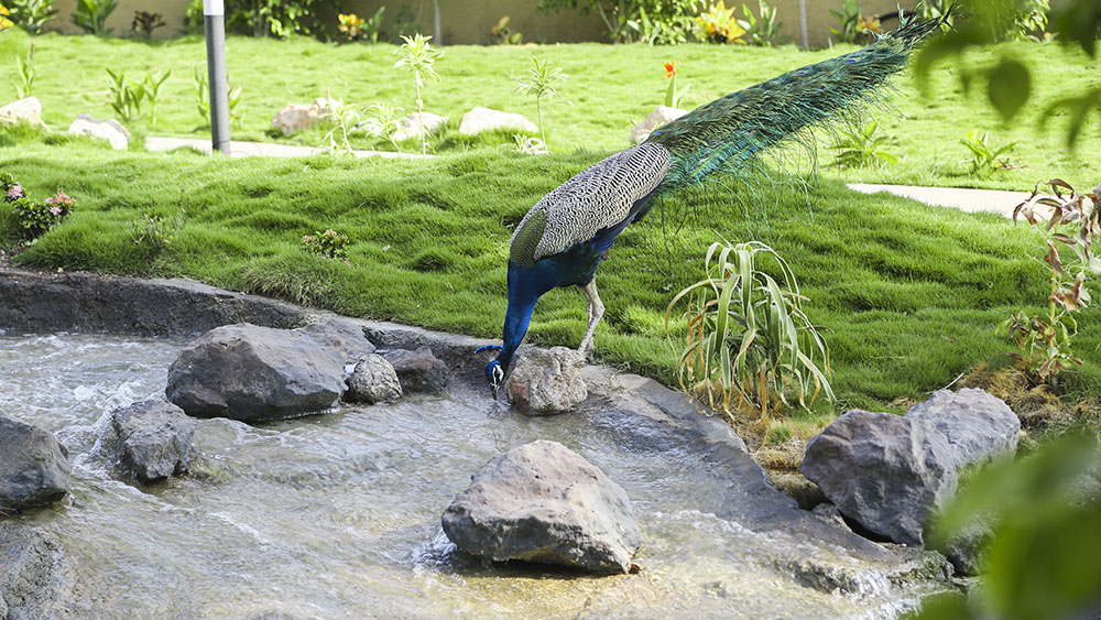 Sarangpur - City of peacocks
