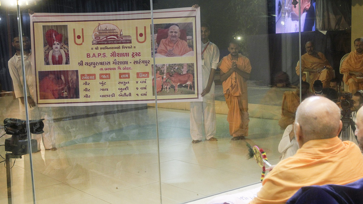 Swamishri observes a presentation on the Gaushala in Sarangpur