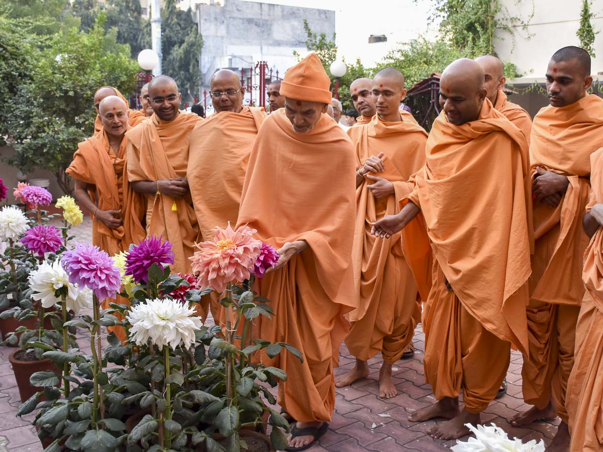 Param Pujya Mahant Swami Maharaj observes a flower in the garden, 13 Feb 2017