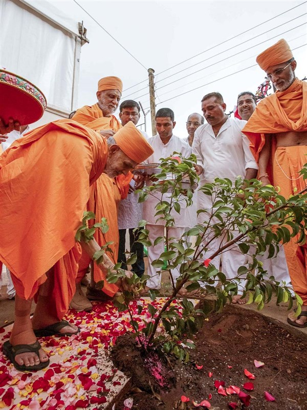 Swamishri plants a tree in the mandir compound