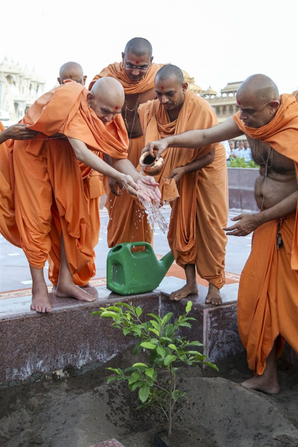 Swamishri waters a plant, 9 Jun 2017