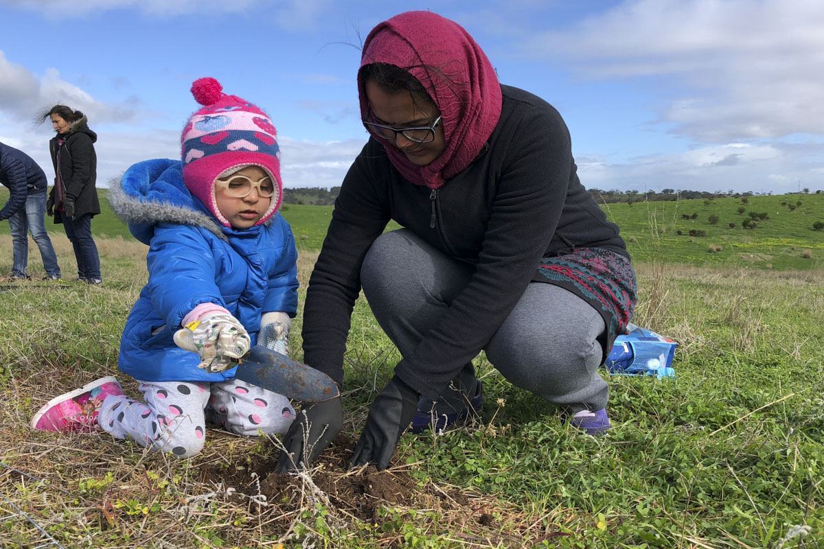 Tree Plantation Drive, Adelaide
