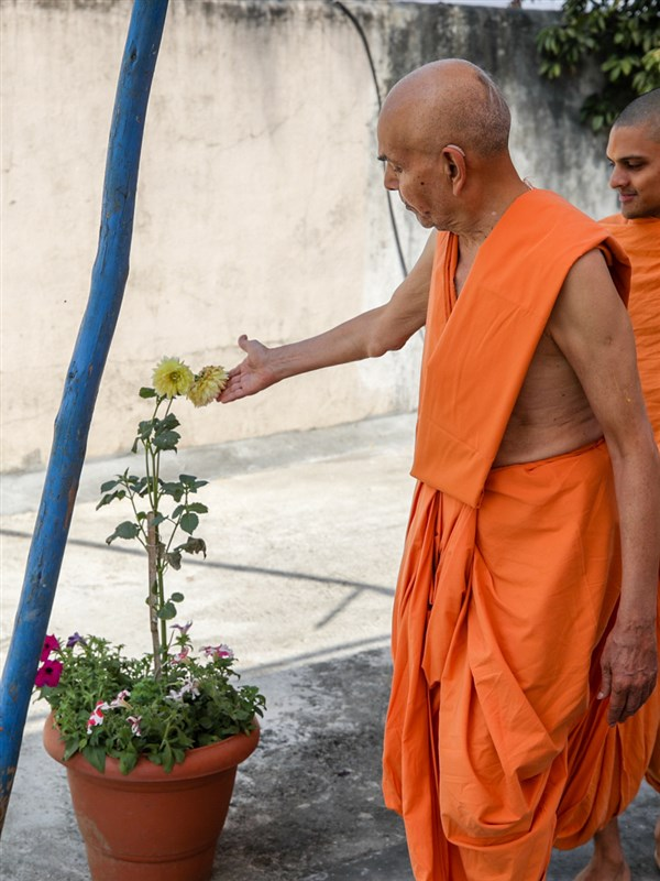 Swamishri sanctifies a flower