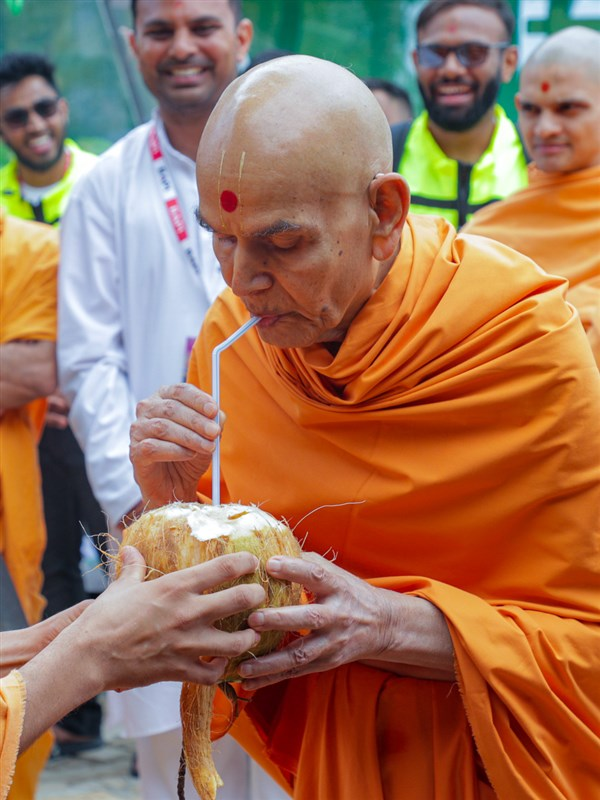 Swamishri drinks the coconut water