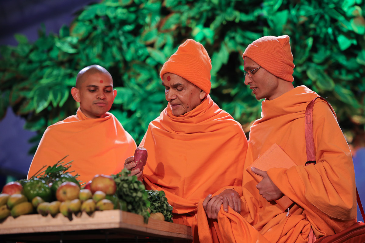 Swamishri sanctifies a sweet potato