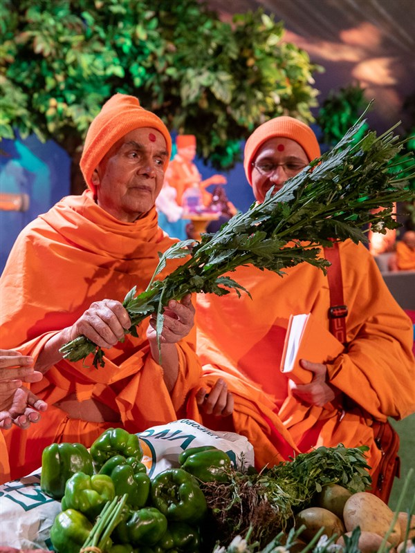 Swamishri sanctifies vegetables