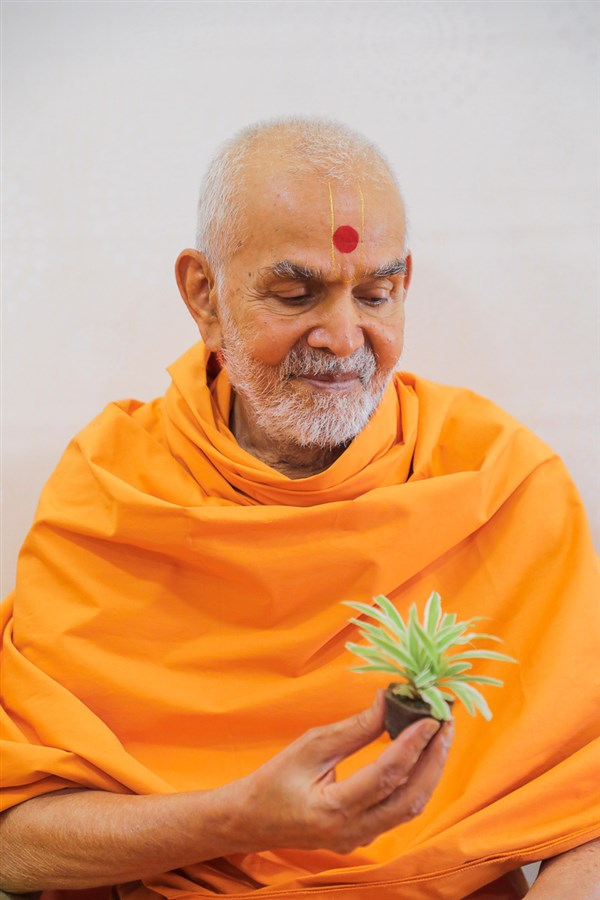 Swamishri sanctifies a plant