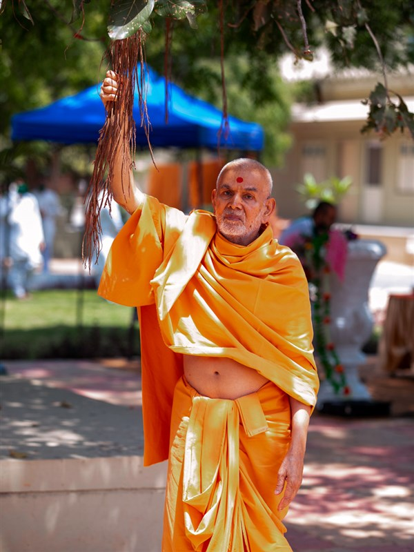 Swamishri holds a branch of a banyan tree