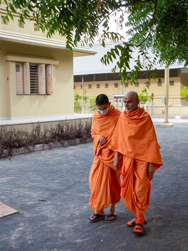 Swamishri walking in the Shantivan grounds in the evening