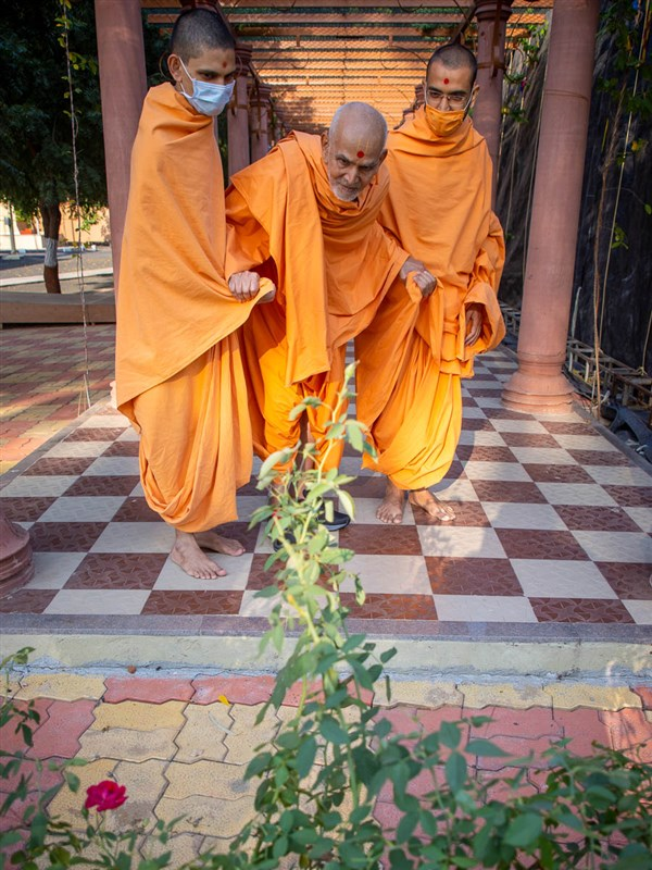 Swamishri observes rose plants