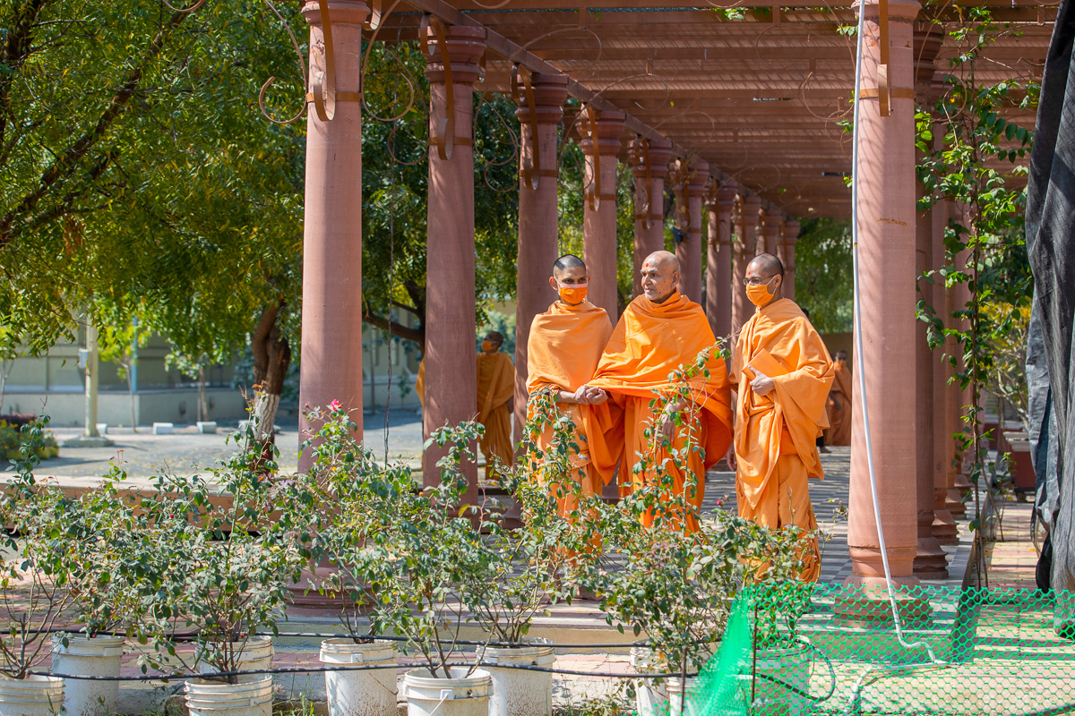 Swamishri observes plants in the Shantivan grounds