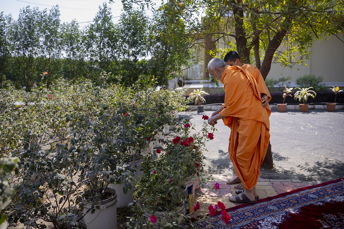 Swamishri plucks flowers to personally make a garland to honor youths who have memorized the Satsang Diksha shastra in Sanskrit