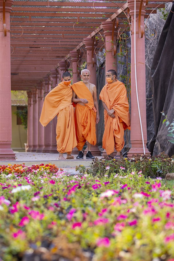 Swamishri observes the plants in Shantivan in the evening