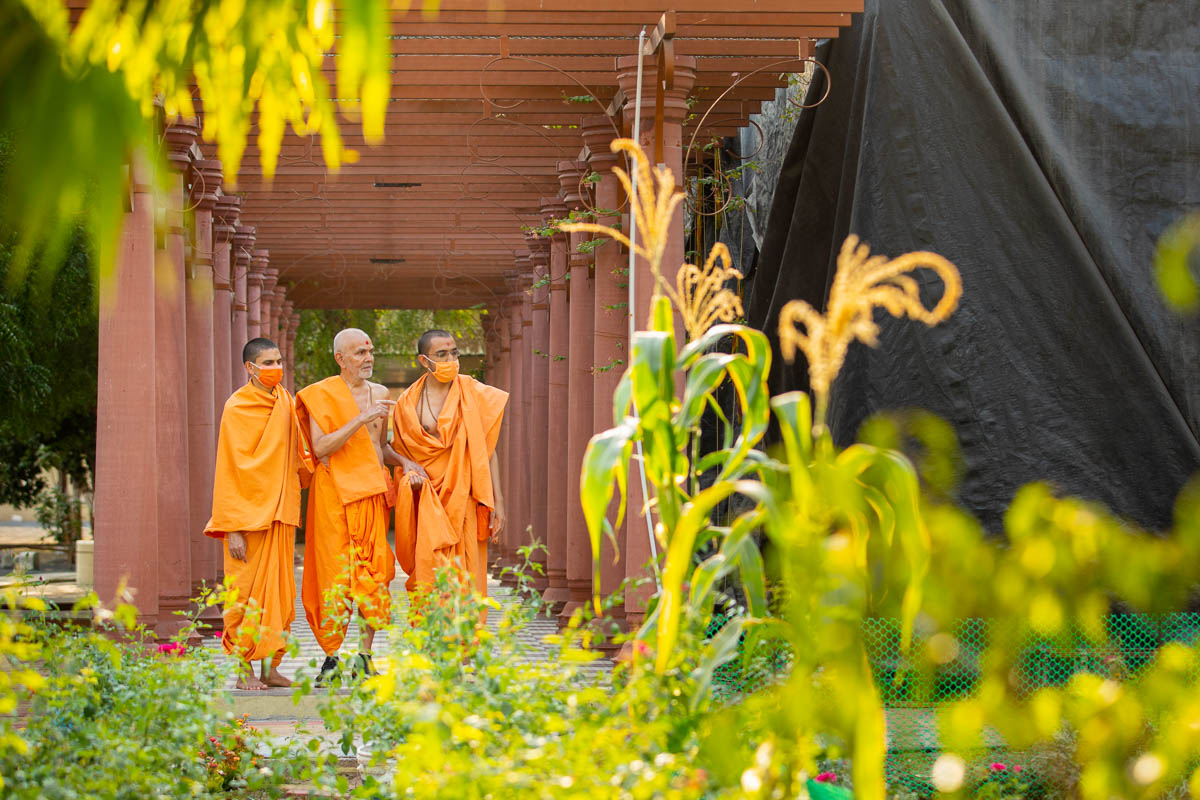 Swamishri observes the plants in Shantivan