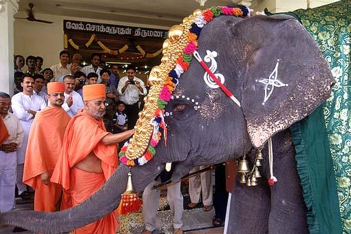Swamishri blesses the elephant