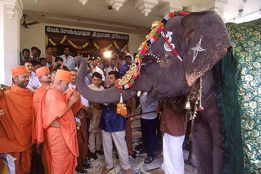 And unexpectedly the elephant expresses its love and blessings by raising its trunk. In response Swamishri humbly accepts its blessings