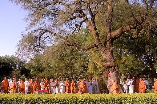 Circumambulating the holy tree sanctified by Lord Swaminarayan. It is also the place where the mortal body of Shastriji Maharaj was brought before it was cremated