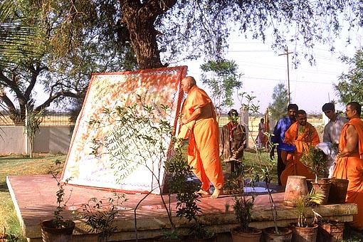 Swamishri offering respects to the tree where Shastriji Maharaj had sat