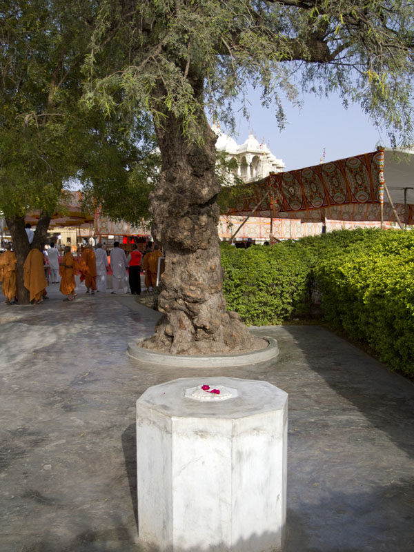Sacred tree (khijdo) and shrine near the Smruti Mandir